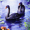 Black swans and river slide puzzle