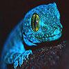 Blue chameleon slide puzzle