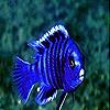 Blue confused fish slide puzzle