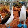 Blue ducks slide puzzle