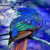 Blue home parrot puzzle