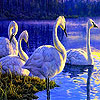 Blue lake and swans slide puzzle