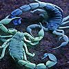 Blue Lobsters slide puzzle