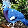 Blue parrot slide puzzle