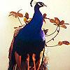 Blue peacock slide puzzle