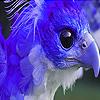 Blue phoenix puzzle