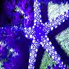 Blue sea star puzzle