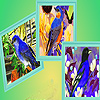 Blue sparrows in fall puzzle