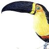 Puzzle Exotic Bird