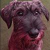 Brown docile dog slide puzzle