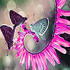 Butterflies and blossom slide puzzle