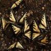 Butterflies Slider