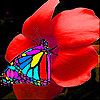 Butterfly eating flower slide puzzle