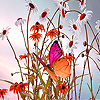 Butterfly in daisy field puzzle