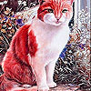 Calm red cat slide puzzle