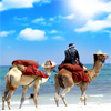 Camels On The Beach Jigsaw