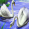 Captivating swans puzzle
