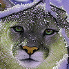 Cat on the snow puzzle