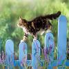 Cat Slide Puzzle