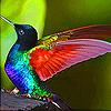Charming hummingbird slide puzzle