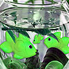 Chatty aquarium fishes puzzle