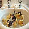 Chicks in the bathroom slide puzzle