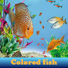 Colored fish. Find objects