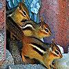 Colored squirrels puzzle