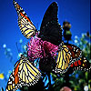 Colorful butterflies slide puzzle