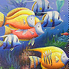 Colorful  deep sea fishes slide puzzle