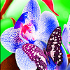 Colorful garden flower slide puzzle
