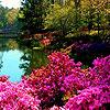 Colorful gardens hidden numbers