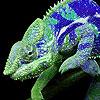 Colorful lizards puzzle