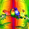 Colorful parrots family slide puzzle