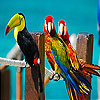 Colorful parrots slide puzzle