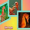Colorful sea horses puzzle
