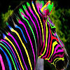 Colorful zebra slide puzzle