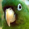Cool Parrot Puzzle