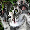 Coward cat slide puzzle