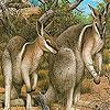 Coward kangaroos slide puzzle