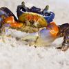 Crab Slider Puzzle