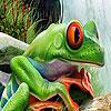 Crack frogs hidden numbers