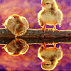 Crazy birds puzzle