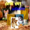 Cute Cat Memory