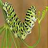 Cute colored caterpillar slide puzzle