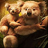 Cute koala family slide puzzle