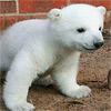 Cute Polar Bear Puzzle