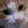 Cute puzzle: Cat