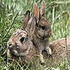 Cute rabbits slide puzzle