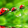 Cute  red ladybirds slide puzzle